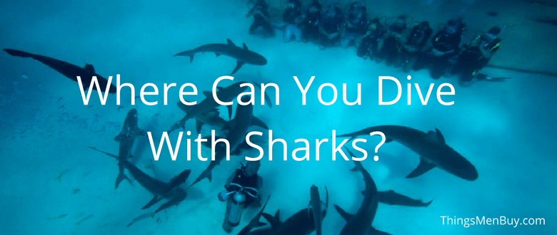 Where Can You Dive With Sharks?