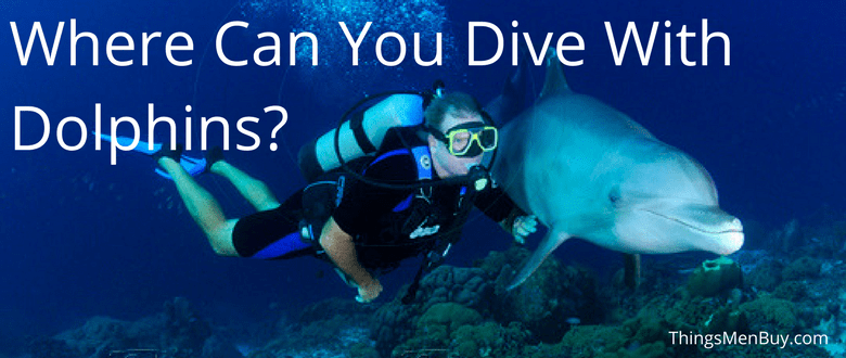 Where Can You Dive With Dolphins?