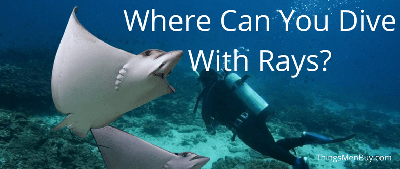 Where Can You Dive With Rays?