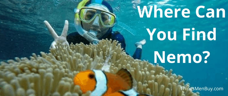 Where Can You Find Nemo?