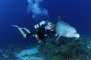 Where can you dive with dolphins